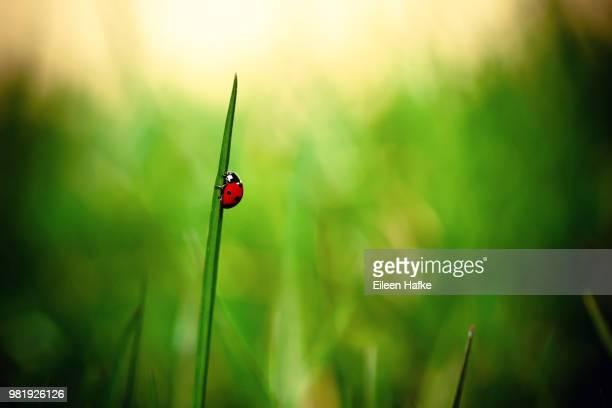 Climbing Ladybug