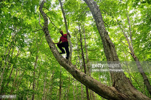 Climbing Maple Trees in Cape Breton