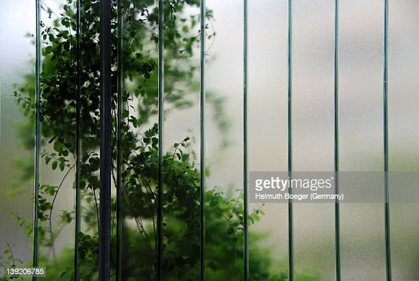 climbing plant behind frosted glass - neu ストックフォトと画像