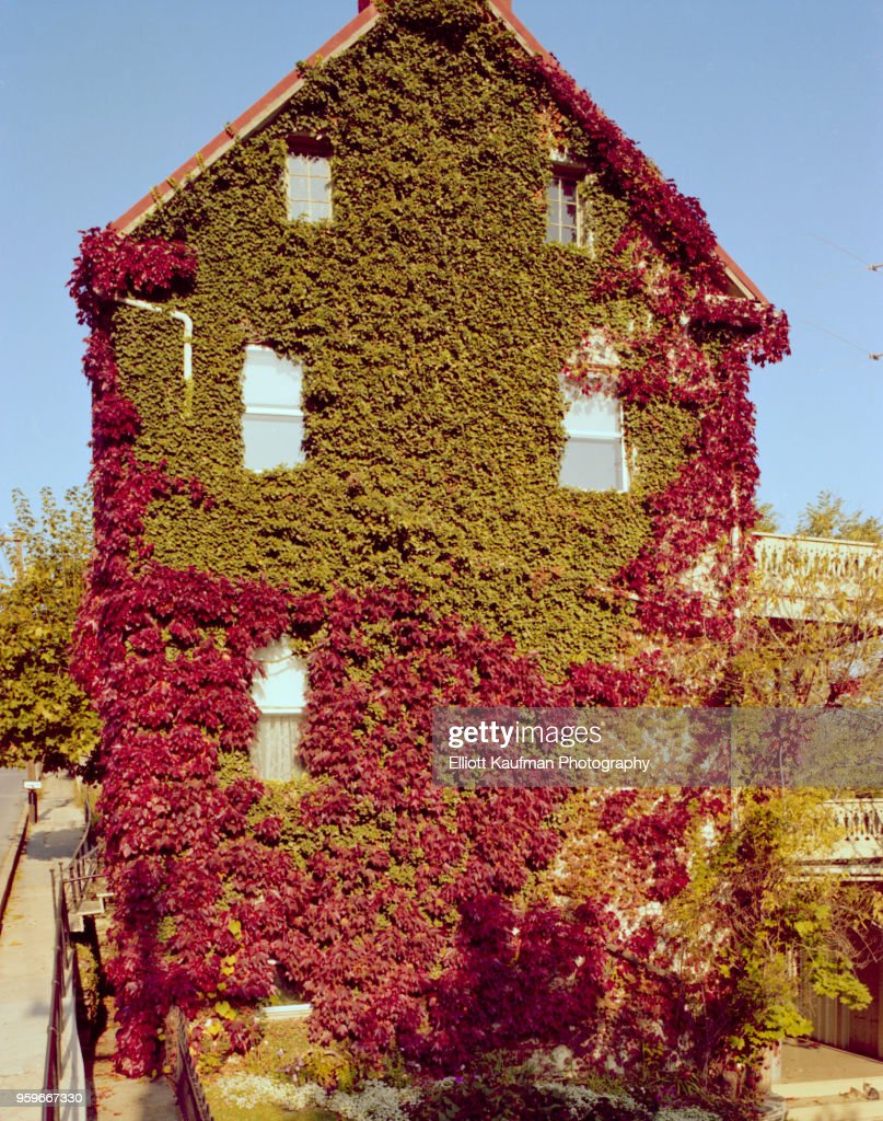 Climbing plant over house in West Virginia : Stock-Foto