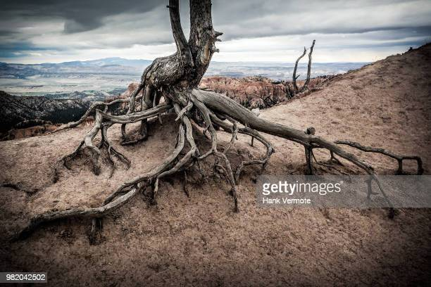 clinging to life - hank vermote stock pictures, royalty-free photos & images