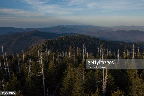 clingman's dome, great smokies np - clingman's dome stock photos and pictures