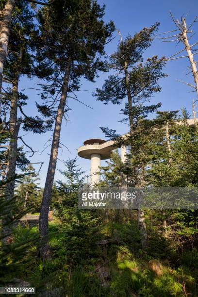 clingmans dome - clingman's dome stock photos and pictures