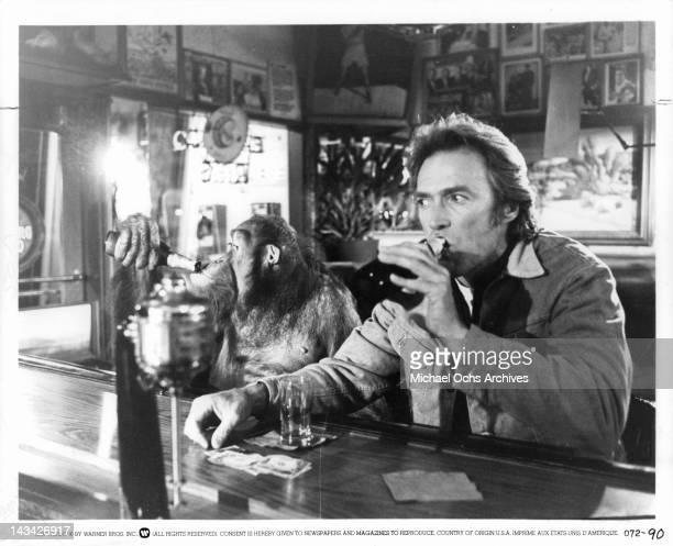 Clint Eastwood and Manis the orangutan at a bar having a drink in a scene from the film 'Any Which Way But Loose' 1978