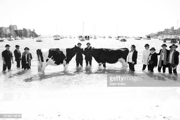 Clint Irrthum and Justin Walsh poses with cows in the water as part an Andrew Baines art installation on Double Bay Beach on August 14 2018 in Sydney...