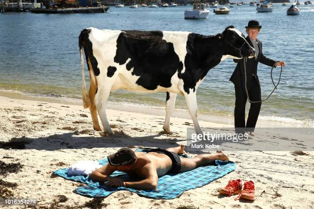 Clint Irrthum walks a cow past a sunbather on the sand as part an Andrew Baines art installation on Double Bay Beach on August 14 2018 in Sydney...
