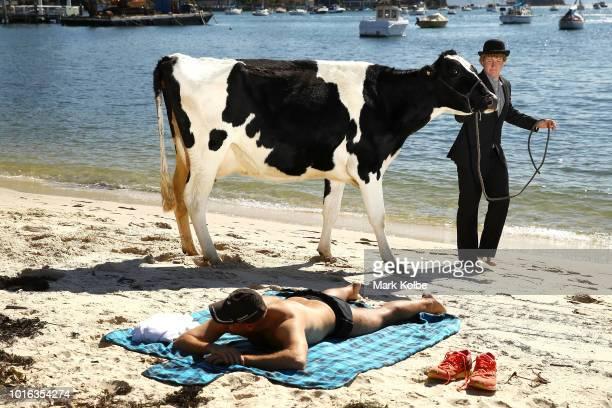 Clint Irrthum walks a cow past a sunbather on the sand as part an Andrew Baines art installation on Double Bay Beach on August 14 2018 in Sydney...