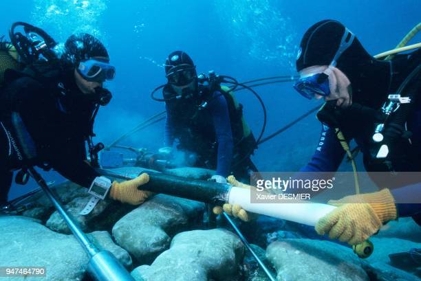 Clipperton atoll. The Noumea DRI team of palaeclimatologists, one of them Thierry Courr?ge, taking a sample of coral in order to study the climatic...