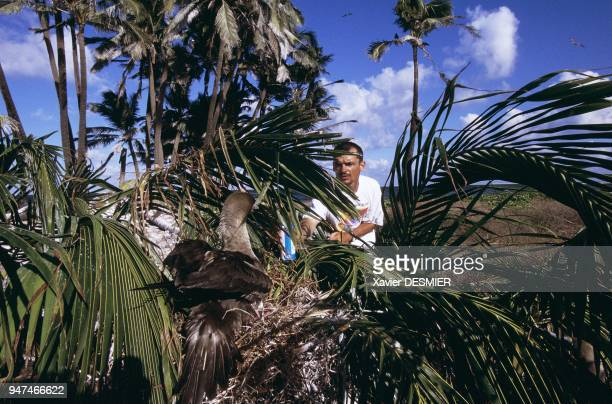 Clipperton atoll The ornithologist Matthieu Le Corre marking a red footed booby Atoll de Clipperton L'ornithologue Matthieu Le Corre en train de...