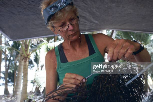 Clipperton island Kirstie Kaiser examining a branch of black coral picked up at a depth of 53 meters on the external sloping of the northern atoll of...