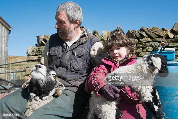 Clive Owen and his daughter Edith wait to have a sheep and her lamb checked at Ravenseat the farm of the Yorkshire Shepherdess Amanda Owen on April...