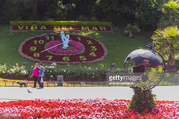 ビーニャ・ビナ・デル・マールの時計の花 - ビーニャデルマル ストックフォトと画像