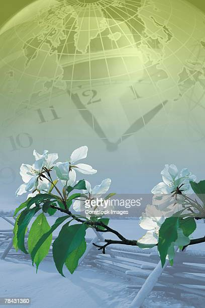 Clock , globe and flowers