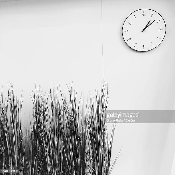 Clock On White Wall With Plant