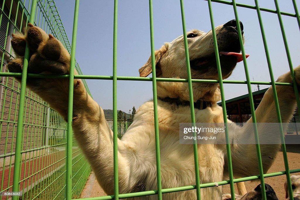 Cloned Sniffer Dogs Begin Training : Fotografía de noticias