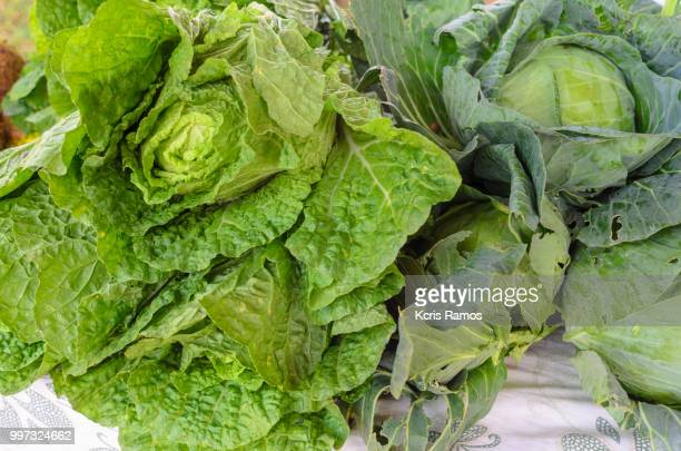 Cloose clove of lettuce america and cabbage
