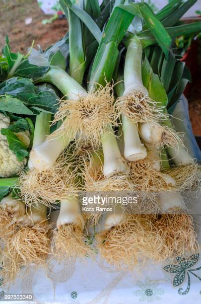 cloose of celery stalks, Celery is a biennial vegetable (meaning it has a normal two-year life cycle), which belongs to the Umbelliferae family, whose other members include carrots, fennel, parsley and dill.