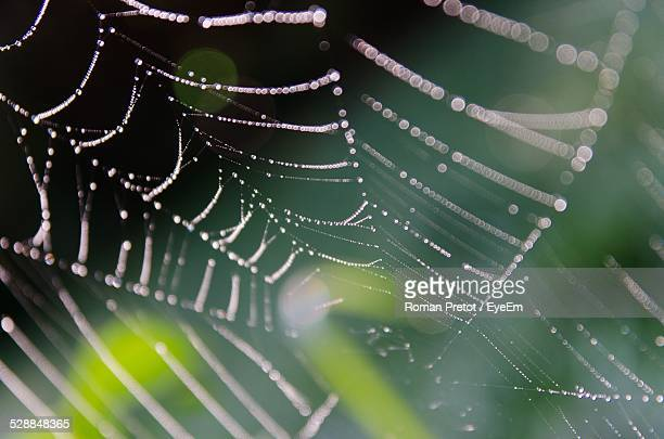 close of spider web with dew - roman pretot stockfoto's en -beelden