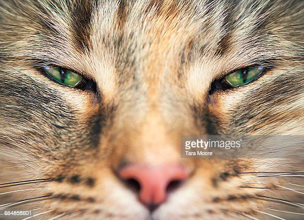 close p of cats face