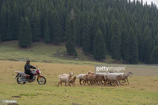 CONTENT] Close to Saryam Lake Kazakh sheperds lead their sheep on a bike across the grasslands
