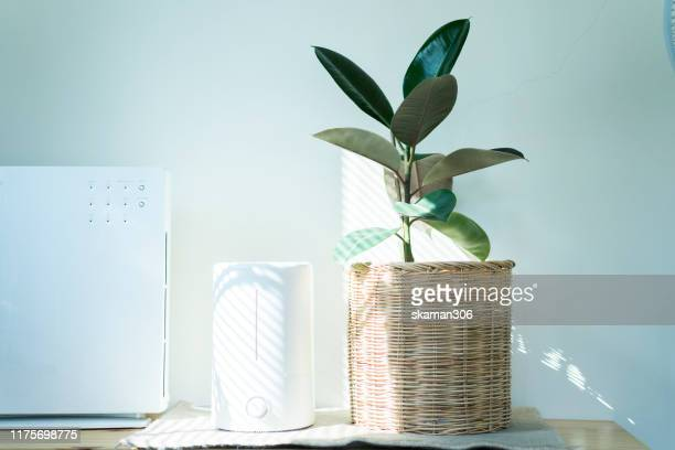 close up air humidifier machine with air purifier indian rubber tree with light from window - humidifier stock pictures, royalty-free photos & images