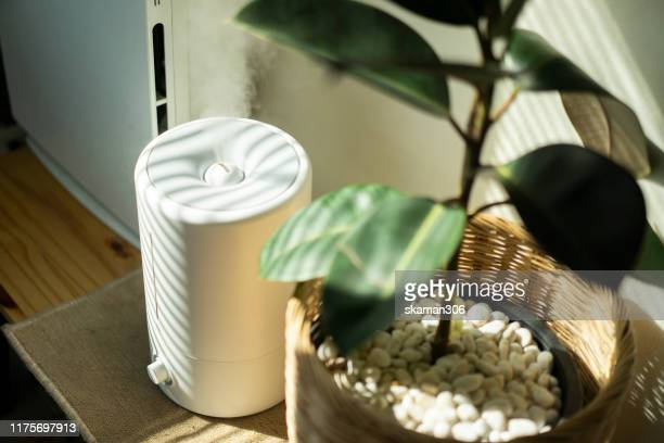 close up air humidifier machine with air purifier tree with light from window - humidifier stock pictures, royalty-free photos & images