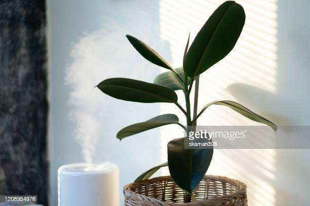close up air humidifier machine with air purifier tree with light from window - humid stock pictures, royalty-free photos & images