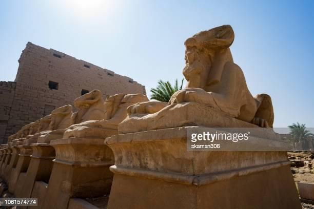 close up animal sphinx in front of  karnak temple at luxor (thebes) egypt - sandstein stock-fotos und bilder