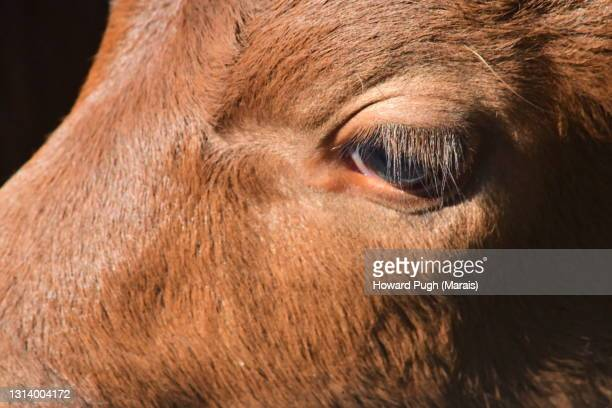 close up animals eye - howard pugh stock pictures, royalty-free photos & images