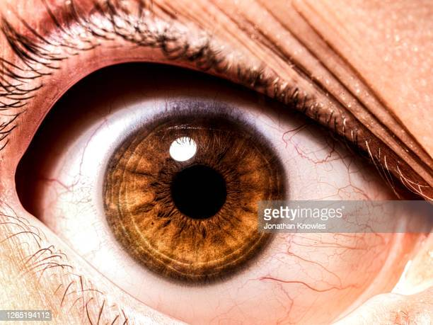 close up brown eye - eye stock pictures, royalty-free photos & images