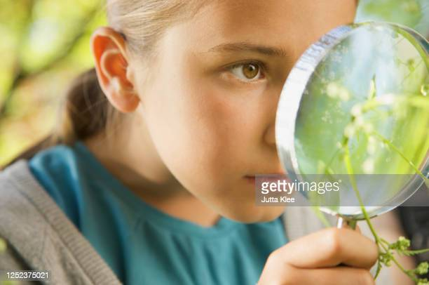 close up curious girl with magnifying glass examining plant - grass stock pictures, royalty-free photos & images