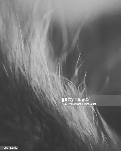 close up detail of dog's fur - animaux domestiques photos et images de collection