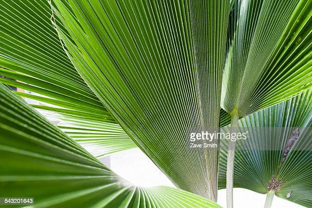 Close up detail of tropical plant leaves