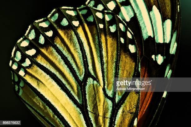 蝶の羽の詳細を閉じます。