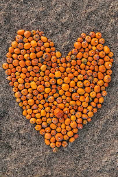 Close up drone shot directly above pumpkins shaped in a heart, United Kingdom