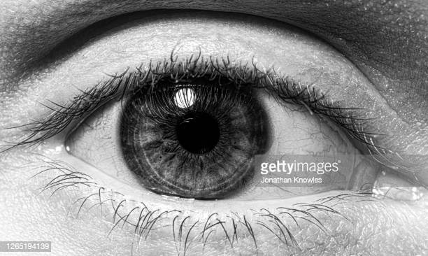 close up eyeball - black and white stock pictures, royalty-free photos & images