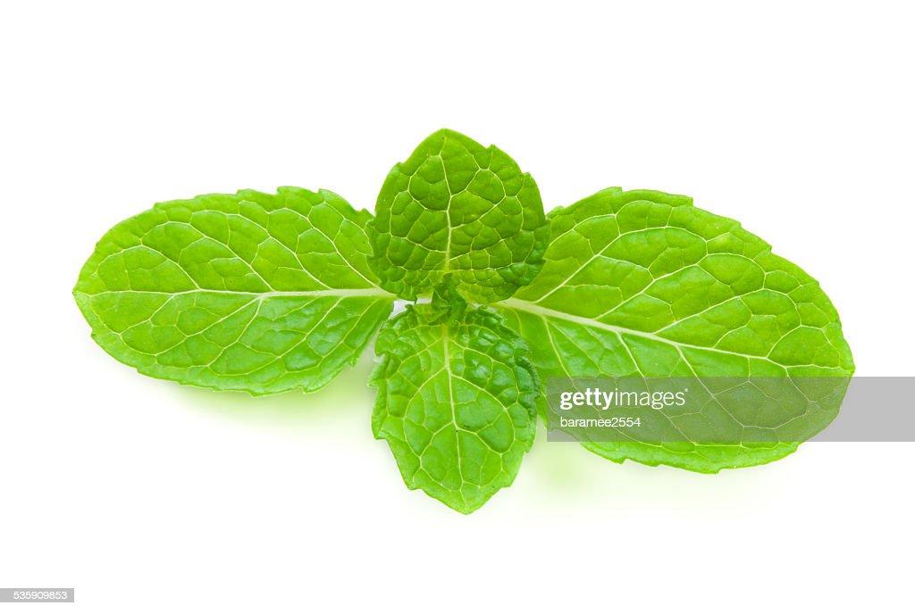 close up fresh mint : Stock Photo