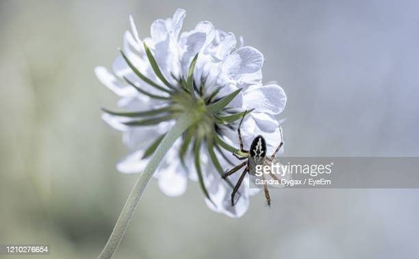 close up from a single spider on a flower - sandra gygax stock-fotos und bilder