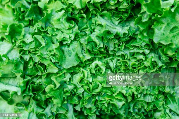 close up full frame shot of lettuce salad - lettuce stock pictures, royalty-free photos & images