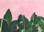 http://www.istockphoto.com/photo/close-up-green-banana-leaves-over-pink-painted-grunge-concrete-wall-gm849017306-139773841