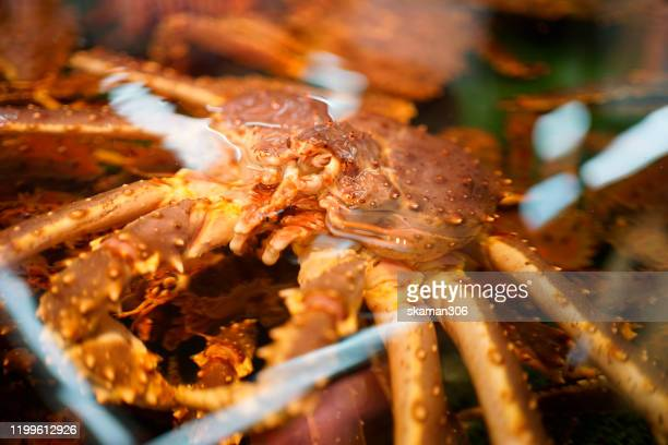 close up japanese king crab for sell in fish market at  hokkaido japan 26 dec 2019 - alaskan king crab stock pictures, royalty-free photos & images