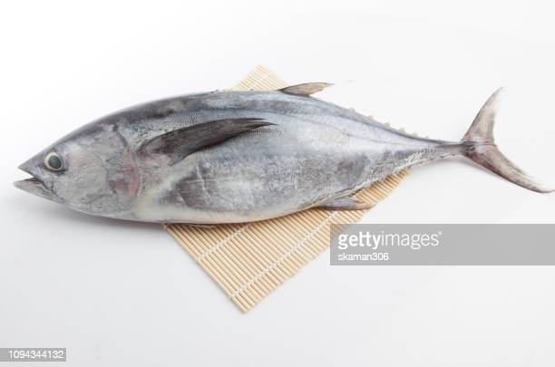 close up japanese tuna (maguro) with white backgrund isolated - tuna stock photos and pictures