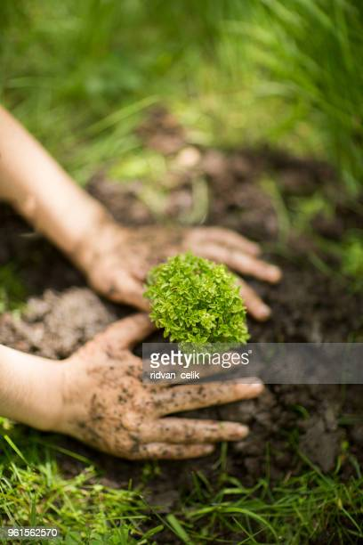 fermer la main kid plantation de jeunes arbres - humus photos et images de collection