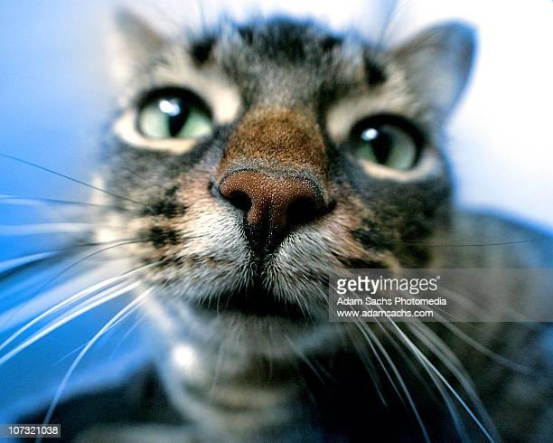 close up kitty - neus van een dier stockfoto's en -beelden