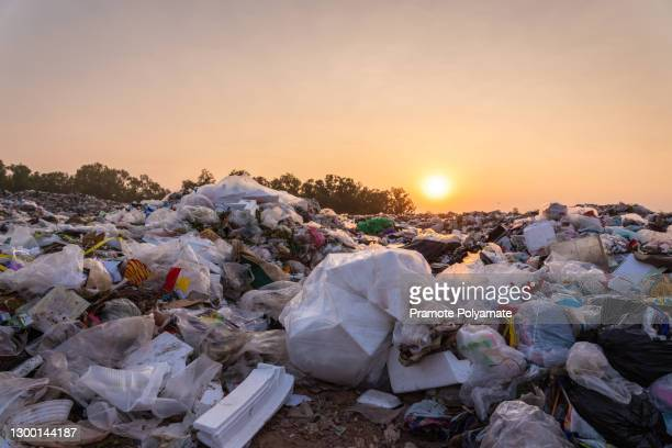 close up large garbage pile near the sunset, global warming - animal stock pictures, royalty-free photos & images