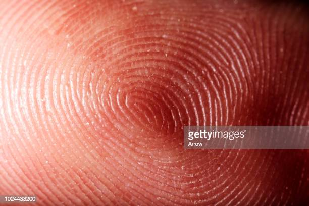 close up marco shots of body parts - extreme close up stock pictures, royalty-free photos & images