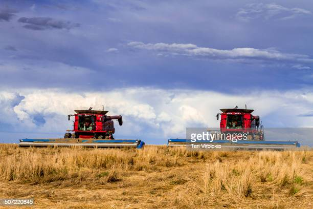 Close up of 2 large red modern combines harvesting wheat field from farm on the eastern plains of Colorado