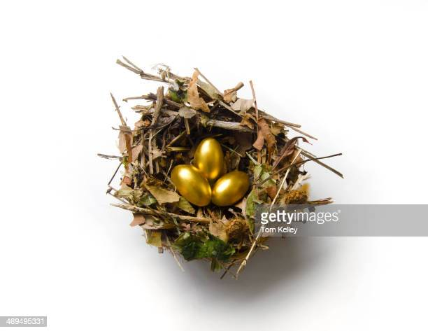 A close up of a birds nest with 3 gold eggs 2011