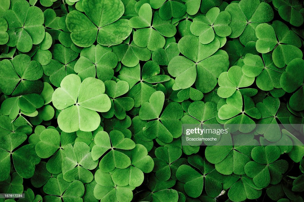 Close up of a bunch of green clover : Stock Photo