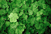 Close up of a bunch of green clover